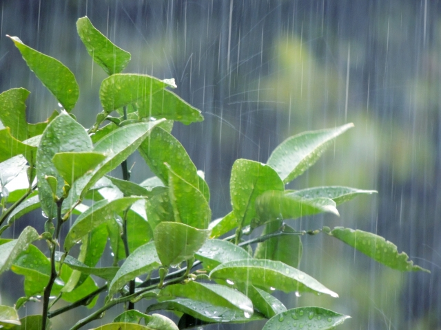 高知県はどうして雨の量が多いのか?